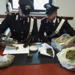 240 grammi di marijuana denunciato