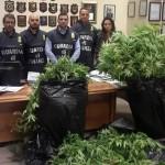 67enne coltivava marijuana nel giardino di casa