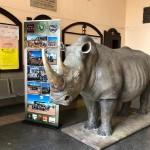 A Ivrea Leo, il rinoceronte coraggioso