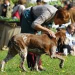 A settembre la 13^ Esposizione Nazionale Canina