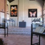 """Alla Fondazione Arte Nova di Romano la mostra """"Farfalle"""""""