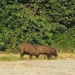 Approvata una mozione per la riapertura della caccia alle specie nocive all'agricoltura