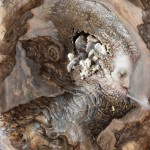 Apre il 4 ottobre al Museo Civico Garda Ivrea  la mostra di Agostino Arrivabene
