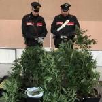 Arresti e denunce in  Canavese per spaccio di droga