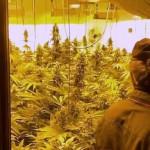Carabinieri sequestrano casolare adibito alla coltivazione della marijuana