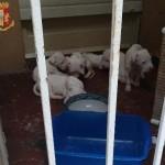 Chiusi sul balcone senza acqua nè cibo salvati 10 cani 1