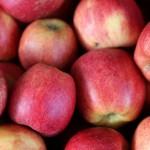 Coldiretti Piemonte al via la raccolta delle mele
