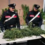 Coltiva piante di cannabis in casa