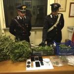 Coltivano marijuana in casa, arrestata intera famiglia a Pont