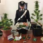 Coltivava droga in casa denunciato un 16enne