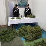 Coltivazione e spaccio di marijuana arrestata una impiegata