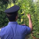 Contadini della marijuana per sbarcare il lunario 1