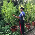 Contadini della marijuana per sbarcare il lunario