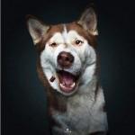 Cuore di…cane! Le opere dell'Artistico del Martinetti in aiuto al canile di Caluso