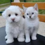 Distribuzione gratuita di alimenti per cani e gatti alle famiglie in difficoltà