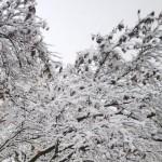 Ecco l'inverno, fine settimana con possibili nevicate a basse quote