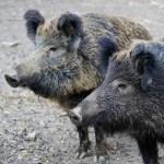 Emergenza fauna selvatica. La dichiarazione dell'Assessore regionale Protopapa
