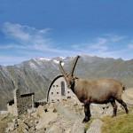 Entra in vigore il Piano del Parco Nazionale Gran Paradiso