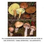 Funghi radioattivi a Meugliano