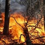 Gli incendi boschivi preoccupano la Regione
