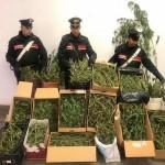 I Carabinieri chiudono un laboratorio per la produzione di marijuana