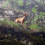 Il Soccorso Alpino salva tre cani da caccia