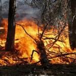 Incendi richiesto al Governo lo stato di emergenza