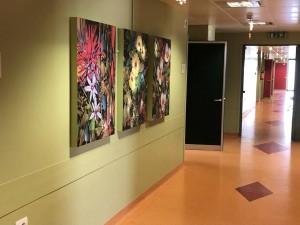 L'arte e la bellezza nel reparto di Ostetricia e Ginecologia all'ospedale di Ivrea 2