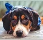 L'adozione di un cane allunga la vita ai cardiopatici