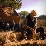 Oggi e domani a Banchette la Sagra del Mais Rosso