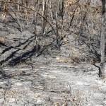 Operazioni di bonifica all'incendio nella zona di Belmonte 2