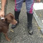 Rubano un cane e chiedono il riscatto arrestati
