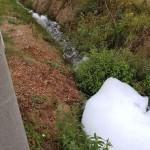 Schiuma bianca nella roggia a Favria 1
