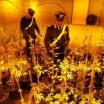 Scoperta e chiusa una fabbrica di marijuana