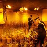 Scoperta e chiusa una fabbrica di marijuana 3