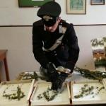 Scoperto a Rueglio laboratorio per la coltivazione della marijuana