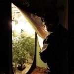Sequestrati oltre 3 kg. di marijuana e due pistole