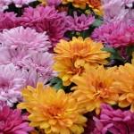 Stretta anti Covid salva la vendita dei fiori