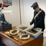 Tra Volpiano e Chivasso carabinieri individuano e-commerce della marijuana