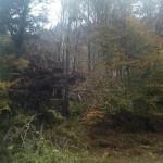 Tromba d'aria in Valle Soana parlano i comuni di Ingria, Ronco e Valprato 1