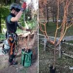 Un corso di gestione di alberi da frutto e ornamentali