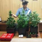 Valchiusella mini serra si cannabis in casa denunciati marito e moglie