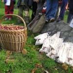 sagra della castagna nomaglio